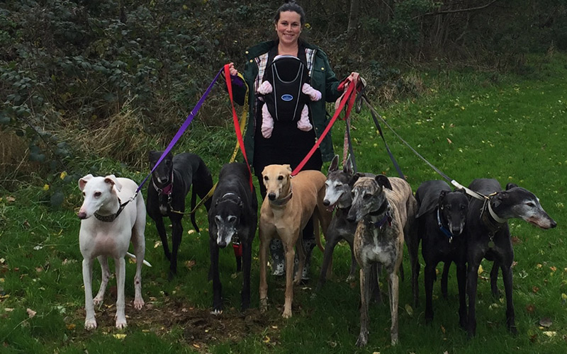 Birmingham Greyhound Protection has been nominated in the Top Charitable Business category