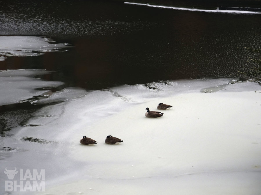 Ducks on a frozen canal by the Mailbox in Birmingham
