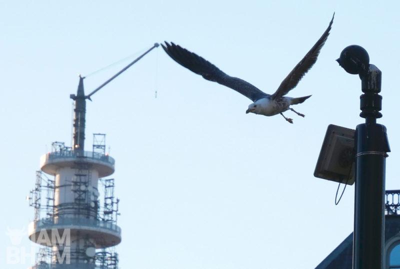 An urban gull flies past the BT Tower in Birmingham