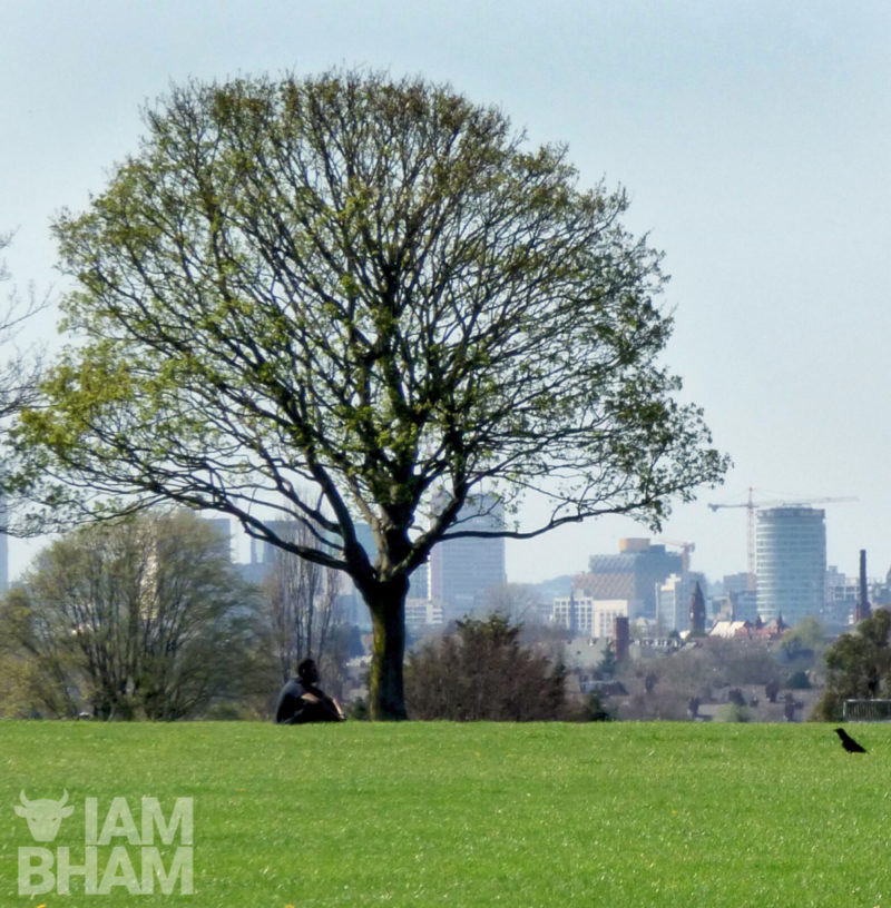 Man and bird resting as they lounge in South Yardley with the Birmingham skyline in the distance, including the Library of Birmingham and the Rotunda