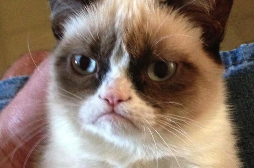 Internet meme legend Grumpy Cat has died, aged 7