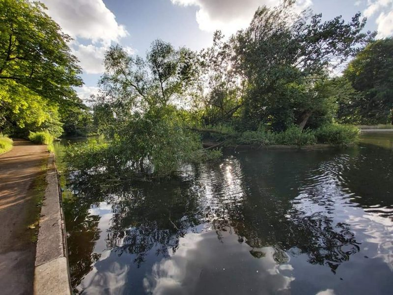 A tree has fallen into the pond which poses a serious hazard to children