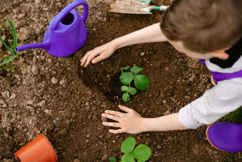 Create a garden together to celebrate and protect the environment