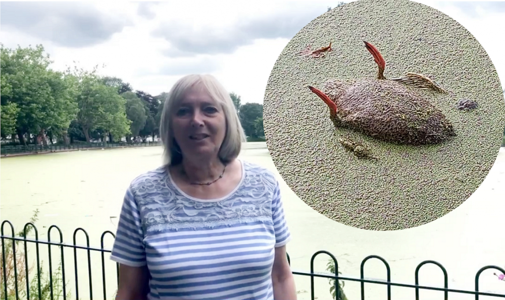 """Edgbaston councillor calls for action to save dying wildlife in """"filthy"""" Small Heath Park lake"""